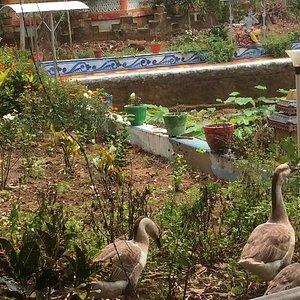 Pretty Big Swans