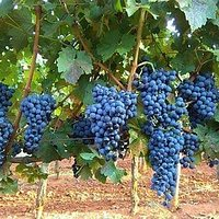 OH Wines