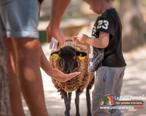 Le Petit Paradis - Parc animalier & de loisirs Les moutons d'Ouessant