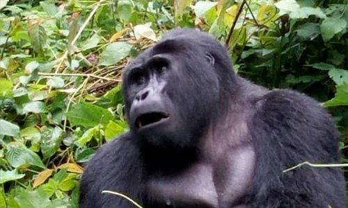 Discounted Gorilla tours this low season