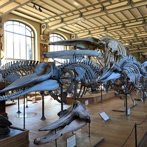 Large sea creatures