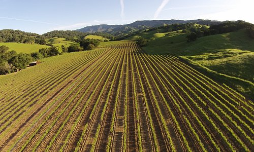 Suisun Valley Vineyard
