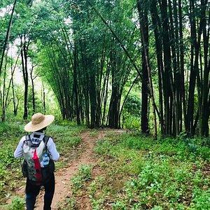 walk through bamboo forest