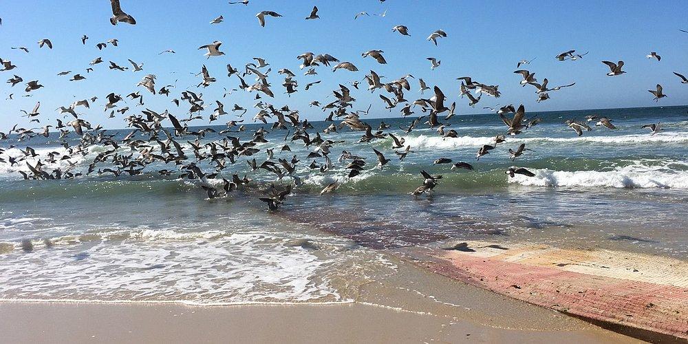 Visvangst bij Praia de Mira