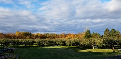A beautiful orchard in St-Nicolas, Que, overlooking the St. Lawrence! This is a wonderful and magical place to visit with the kids, eat the juiciest and most flavourful apples and pies you've ever tasted! The owners, Lynne and Daniel, are such welcoming and gracious hosts - definitely a jewel in Quebec!