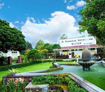 Karanganjar coffee plantation blitar