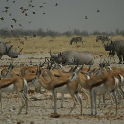 Bringing Africa closer , teaching conservation wider
