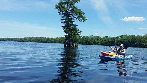 Cypress Tree Kayaking