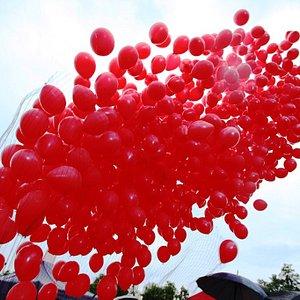 A release of 1000 helium balloons from a balloon net / Wypuszczenie 1000 balonów z helem z siatki /  Un lanzamiento de 1000 globos de helio de una red para globos.