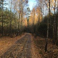 Mosina jesienny spacer