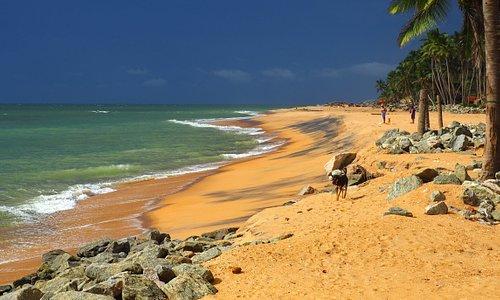 Шри-Ланка. Пляж Маравила. Октябрь 2017. Ждали дождя...