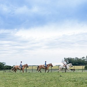 The horses are so tame and well trained, even our 5-year olds had so much fun!