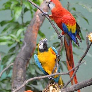 Parrots of garden