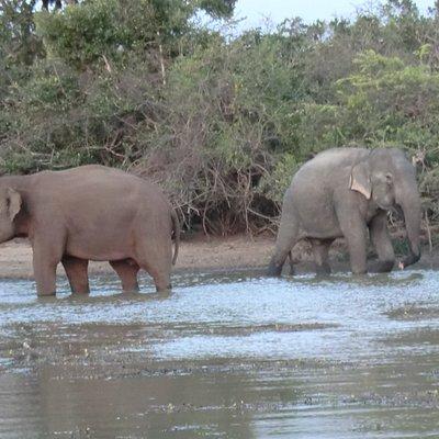 Mowgli Safari @Yala