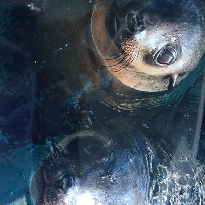 Friendly Seals