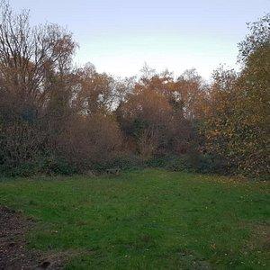 Gunnersbury Triangle