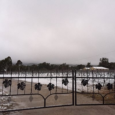 Snow on the Kominos Wines vines