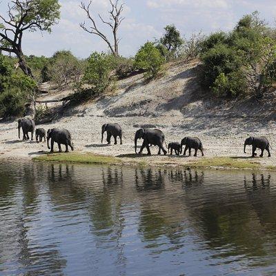 aboard the Zambezi Queen on the Chobe river Namibian side