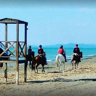 Horseback trail on the beach