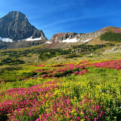 One of the most popular hiking trails in Glacier National Park is Hidden Lake Trail on Logan Pass. The trailhead is behind the Logan Pass Visitor Center, midway from east to west on Going-to-the-Sun Road. Get there early enough to find a parking spot so you can enjoy views of wildflowers and wildlife such as mountain goats and moose from the trail.
