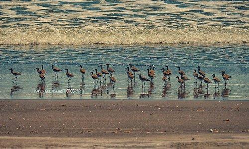 Aves en las costas del pacífico