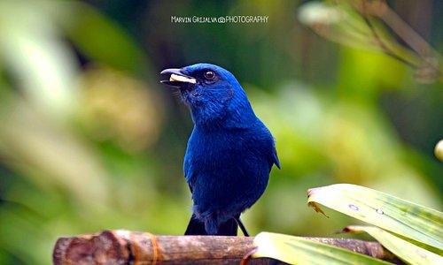 Bellas aves que podemos observar en el departamento de Baja Verapaz, ven y disfruta de nuestros birdwatching tours!