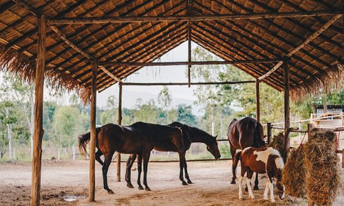 Second Wind Ranch&Rescue is a sanctuary for maltreated equines and a retreat for overstimulated humans.