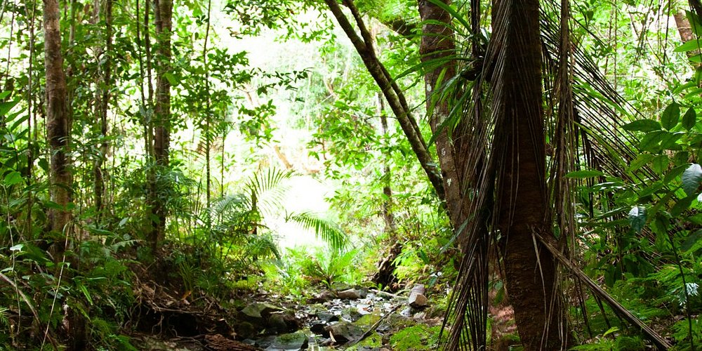 Windin Waterfall Hike, Atherton Tablelands Tropical North Queensland | Cairns