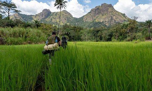 Jungle Trekking in Sierra Leone