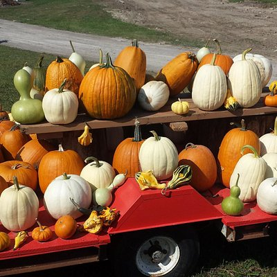 pumpkins in fall in kirkfield hwy 6 and McGuire Beach rd