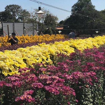 Passeio em Holambra com visitação aos campos de flores!