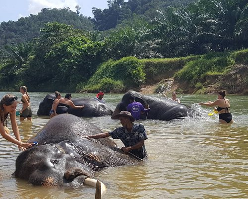 Unseen Khaosok Eco Tour. Elephant bathing in the cool clean river which surrounding of nature.