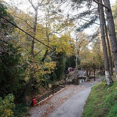 Natural green park