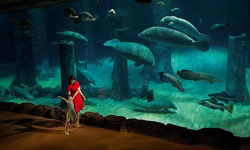 Be amazed by the world's largest freshwater aquarium with over 18 species like the manatees & more