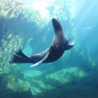 Sea Lion - so fun and playful