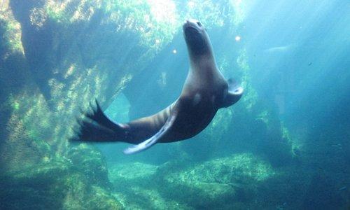 Sea Lion - so fun and playful