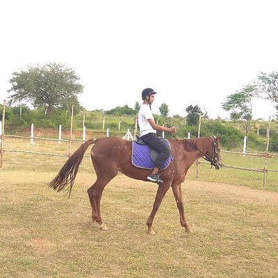 Stallions Valley Horse Riding Academy