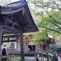 千年菩提樹は鐘楼と本堂の間にあります