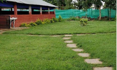 Lush Green Lawns - Camp Solur