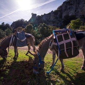 Asini in sosta, pronti per il trekking in Ogliastra