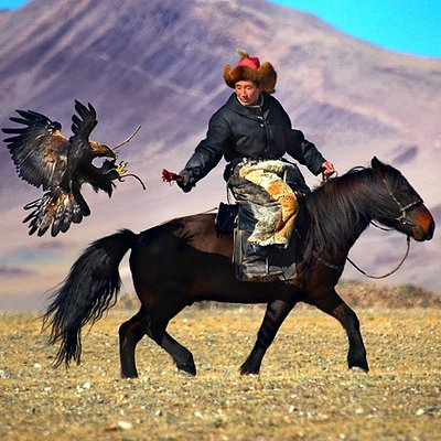 """Meet a Golden Eagle and the Burkitshi falconer during a training session to  see just how he trains the bird of prey for hunting in the wildlands. You can also feel the immense weight of the bird on your own arm as you """"fly the bird"""" yourself.  Kazakhnomadic.com"""