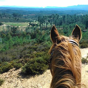 Enjoy the elevated views from a horseback!