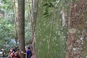 The hiking trail
