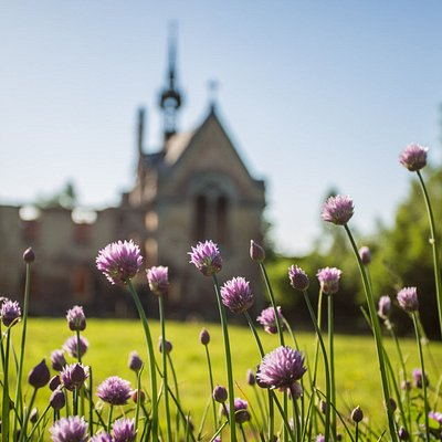 From behind the chives. Photograph by Kamila Dondziak.