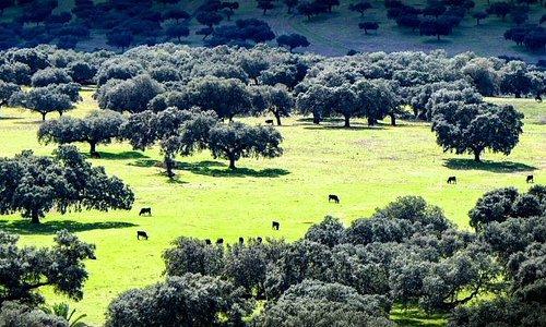 Paisajes de la dehesa extremeña en la zona del Lago Alqueva en la frontera con Portugal