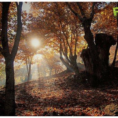 Primavera de Cobre en el Valle del Genal. Un bosque atlántico en plena Serranía de Ronda (Andalucía)