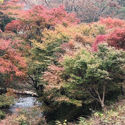 紅葉ピークには達しておらず、又、天気も曇りぎみでしたので、写真の色合いも今一つです。