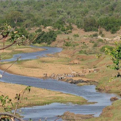 Stunning river view whilst on a walking safari  #africansafari #luxurysafari #safari #safaris #walkingsafari #walkingsafaris #wildafrica #wildernesssafaris #africanwildlife #big5 #bigfive #adventurenthusiasts #adventuretravel #hikelife #hikingadventure #natgeoadventure #outdooradventures #peoplewhoadventure #hikinglife #hikingtrail #peoplewhohike #loveoutdoors #outdoorlife #wildernessnation #krugernationalpark #südafrika #travelafrica #travelnow #fgasa #bushcraft