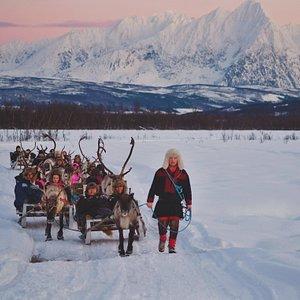 The best reindeer sledding view in all of Tromsø!