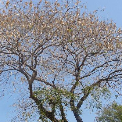 Bois noir, sur le sentier du lirttoral menant à La Jamaîque.